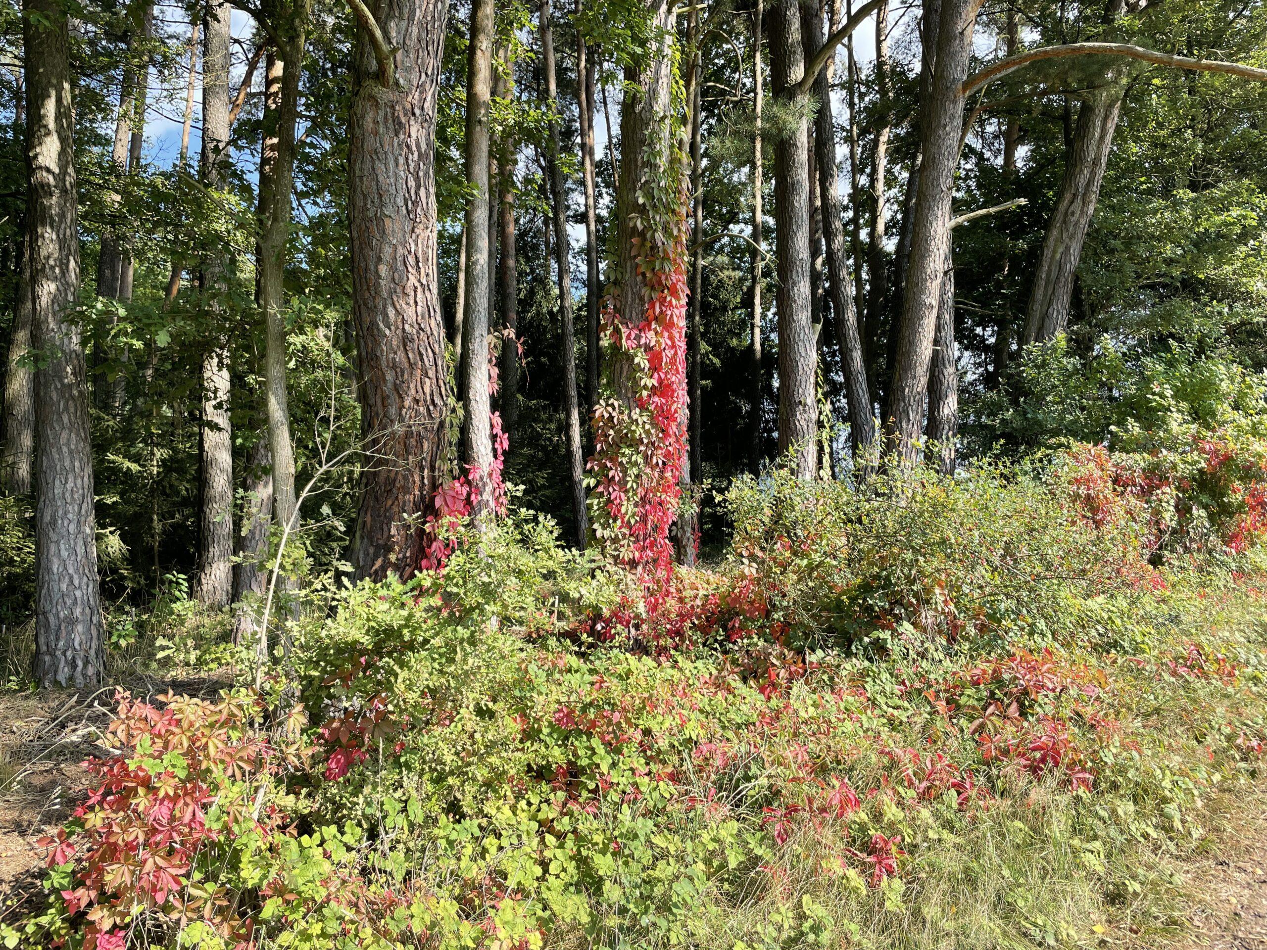 Herbstlicher Wald in der Oberpfalz